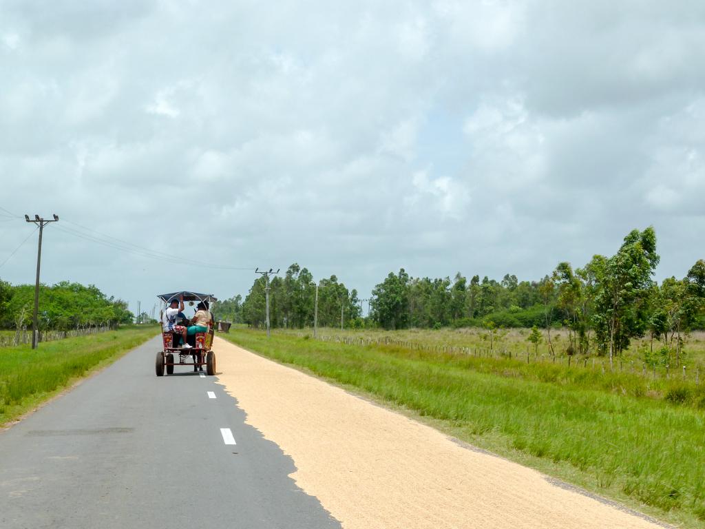 Auf Kuba wir Reis auf der Straße getrocknet