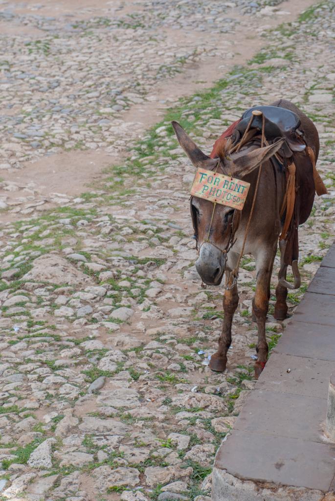 Trinidad Foto mit einem Esel