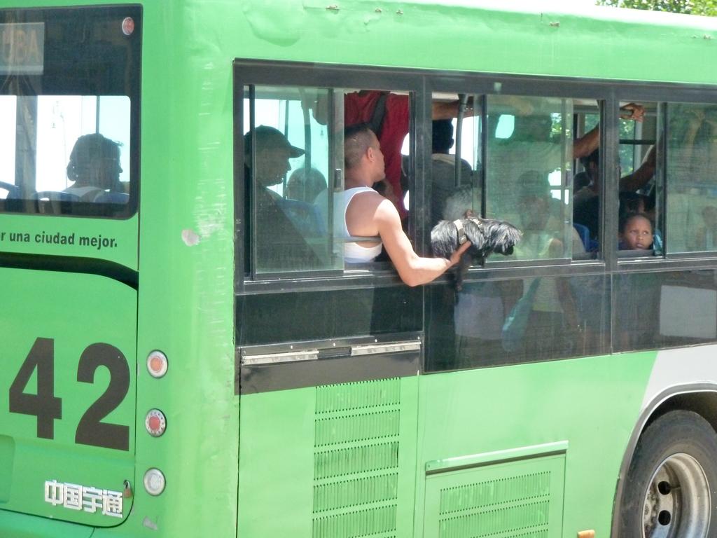 Havanna Tiertransport