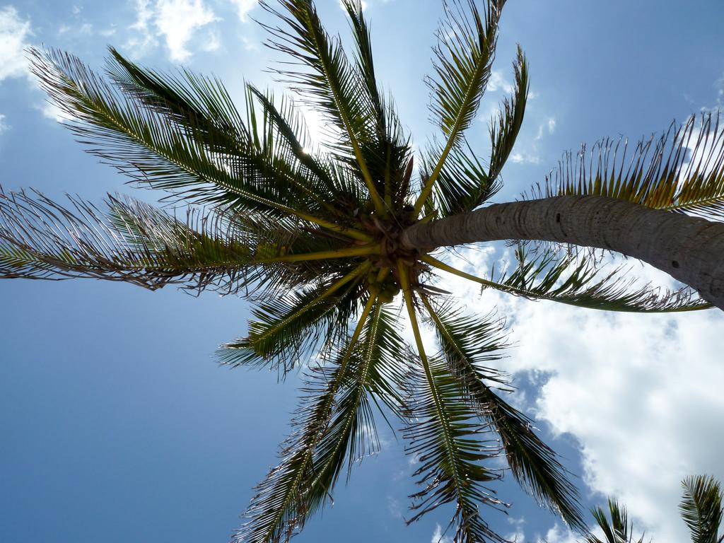Palmen am Havanna Strand